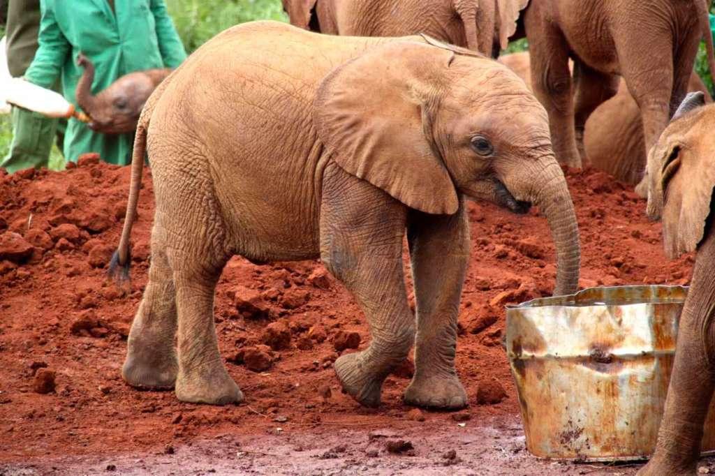 Orfanato de Elefantes de David Sheldrick en Nairobi (Kenia)