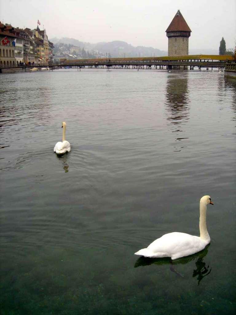 Cisnes con el puente de Berna al fondo, Suiza. 10 curiosidades sobre Suiza.